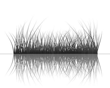 Vector gras silhouetten achtergrond met reflectie in het water. Alle objecten worden gescheiden.