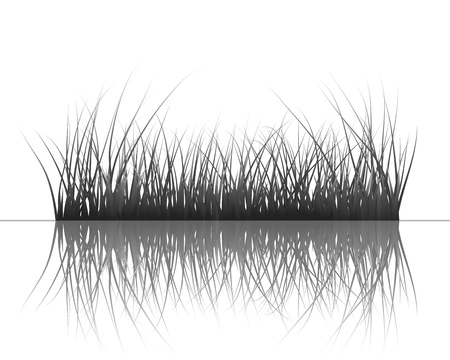 shrubs: Vector grass silhouettes background with reflection in water. All objects are separated.