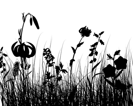 grasslands: Vector grass silhouettes background. All objects are separated. Illustration