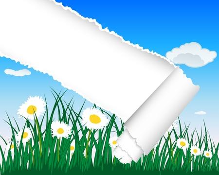 la hierba siluetas de fondo con rayas rasgado. Todos los objetos est�n separados. Foto de archivo - 13100748