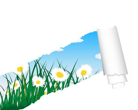 grass silhouettes background with ripped stripe. All objects are separated. Stock Vector - 13100752