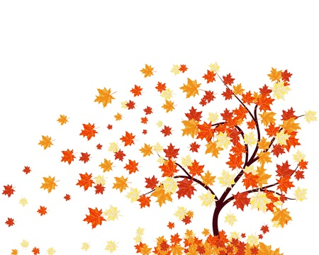 fall trees: Autumn maples falling leaves background.