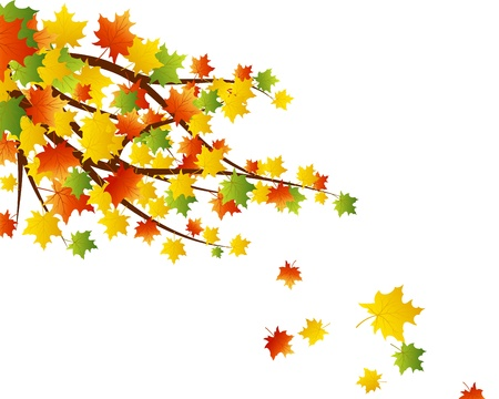fall leaves border: Autumn maples falling leaves background.