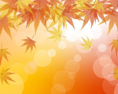 arbre automne: �rables d'automne tombent les feuilles d'arri�re-plan. Illustration