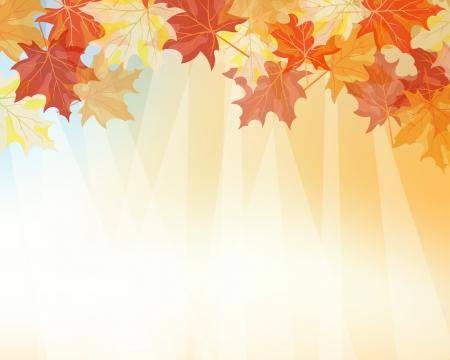 Herfst esdoorns vallende bladeren achtergrond.