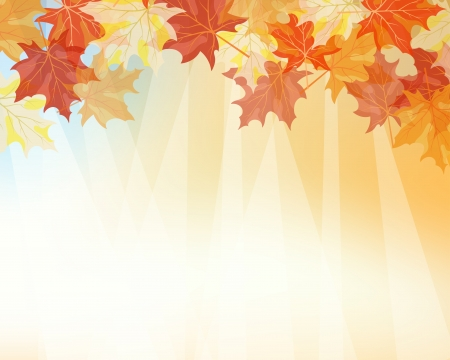 Autumn maples falling leaves background.  Stock Vector - 14791895