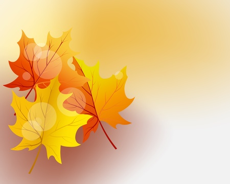 Autumn maples falling leaves background. Stock Vector - 14791875