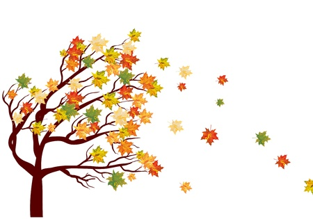 tree in autumn: Autumn maple tree with  falling leaves. illustration.