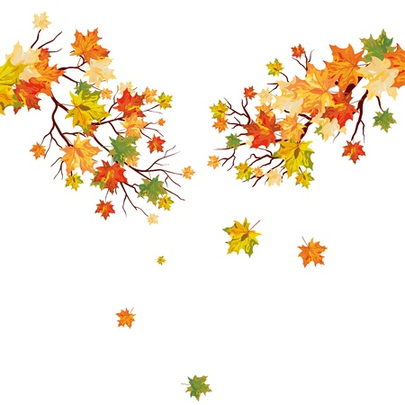 Autumn maple tree with  falling leaves. illustration.