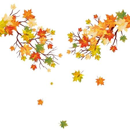 hojas de oto�o cayendo: �rbol de arce del oto�o con las hojas que caen. ilustraci�n.