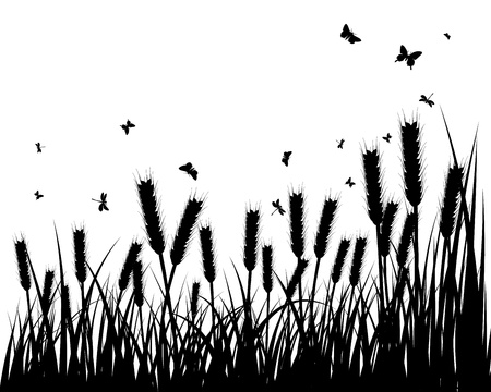 wheat grass: grass silhouettes background. All objects are separated. Illustration