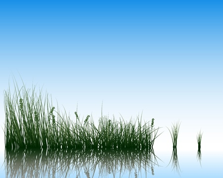 grass silhouettes background with reflection in water. All objects are separated. Stock Vector - 15014397