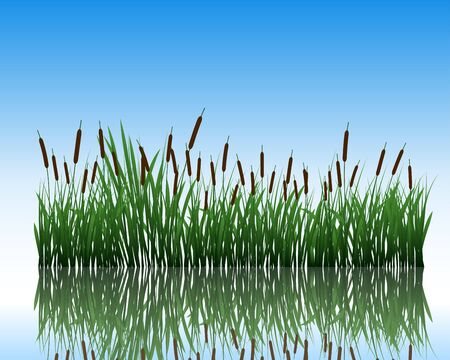 reeds: grass silhouettes background with reflection in water. All objects are separated.