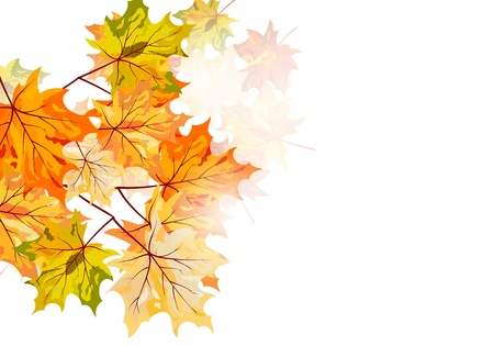 Autumn maple leaves background. Vector illustration with transparency EPS10. Vector