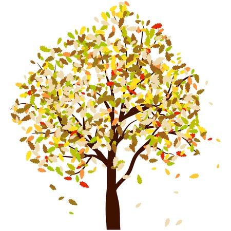 oak tree: Autumn oak tree with falling leaves. illustration.