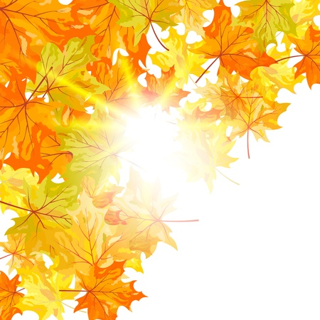 Autumn maple leaves background. illustration with transparency Stock Vector - 15093282