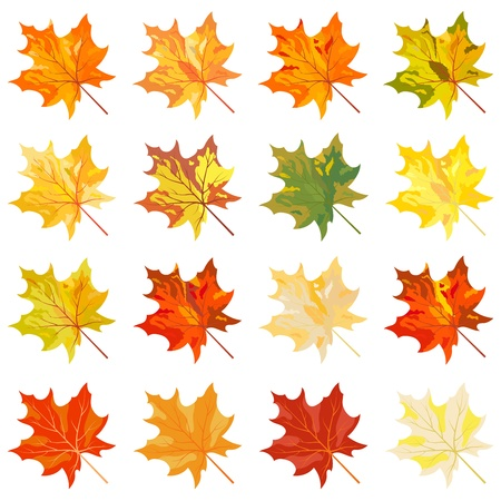 Collection of color autumn leaves. illustration. Stock Vector - 15166184