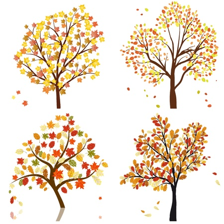 birch forest: Set of four autumn tree. illustration.