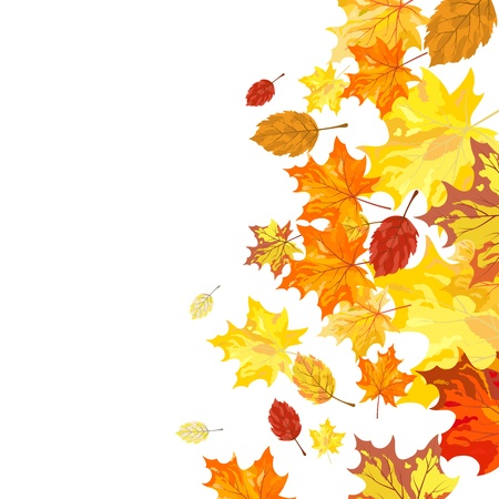 Autumn maple leaves background. Vector