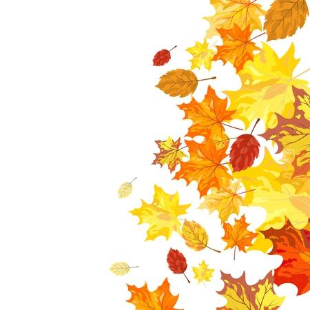 autumn leaf: Autumn maple leaves background.