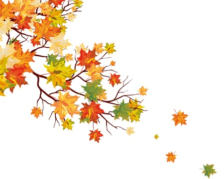 Autumn maple leaves background.