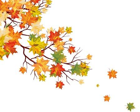 autumn leaf frame: Oto�o las hojas de arce de fondo.