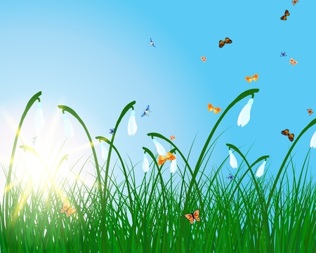 Meadow color background with butterfly and sun. Vector