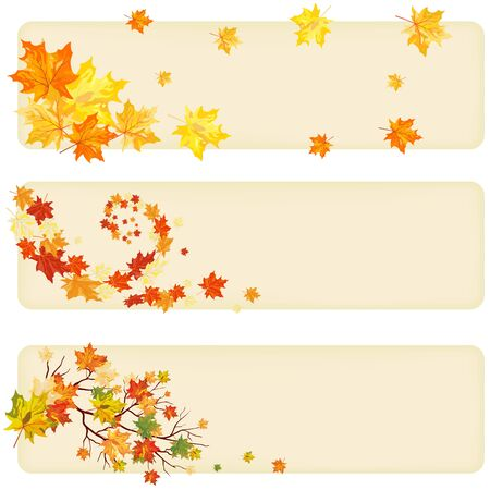 Autumn maple tree leaves on  paper banner. Vector illustration. Vector