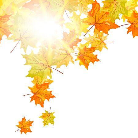 Autumn falling maple tree leaves. Vector illustration. Stock Vector - 15917076