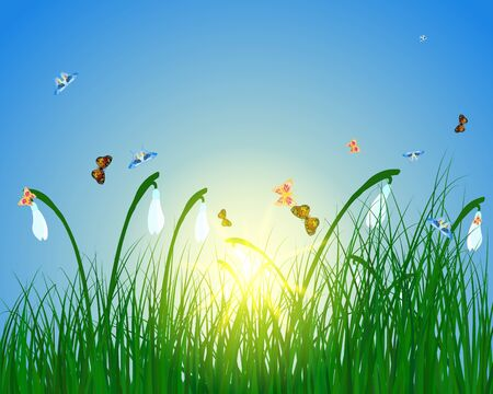 Meadow color background with butterfly and sun. All objects are separated. illustration with transparency. Stock Vector - 16575090