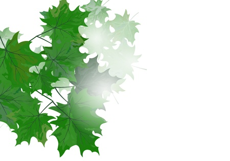Summer maple leaves. EPS 10 vector illustration with transparency and meshes. Stock Vector - 19802307