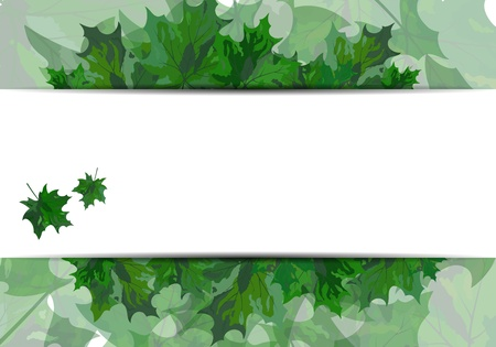 Summer maple leaves. EPS 10 vector illustration with transparency and meshes. Stock Vector - 19802302