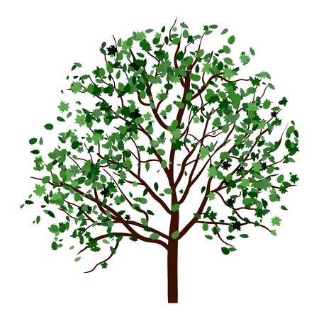 Summer tree with green leaves. EPS 10 vector illustration. Stock Vector - 19802299