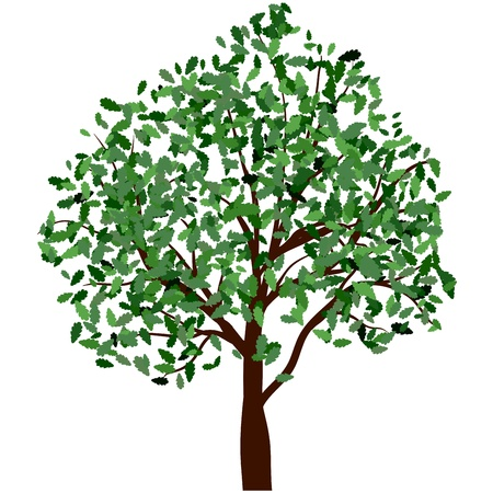 Summer tree with green leaves. EPS 10 vector illustration. Stock Vector - 19802300