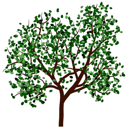 Summer tree with green leaves. EPS 10 vector illustration. Stock Vector - 19802308