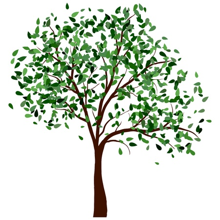 young tree: Summer tree with green leaves.illustration.