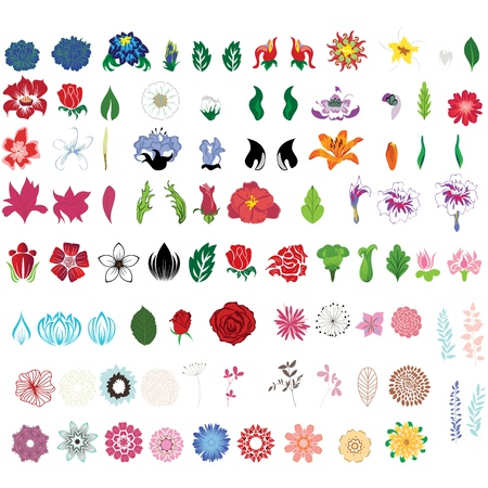 rose garden: Big collection of flowers  Fully editable vector illustration