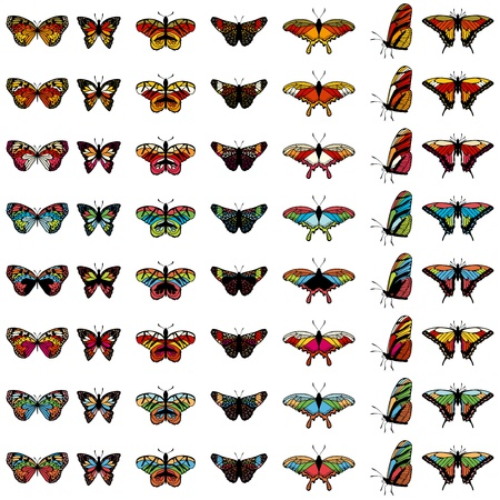 moths: Set of butterflies in different colors