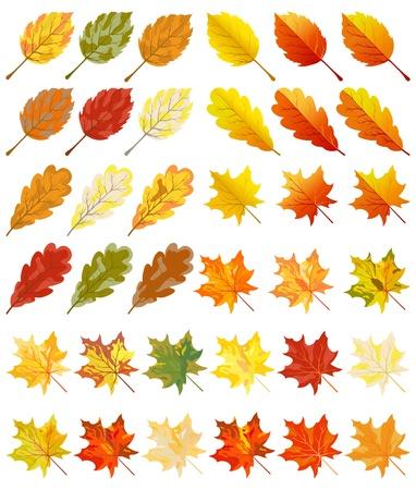 Collectie van kleur herfstbladeren. Vector illustratie.
