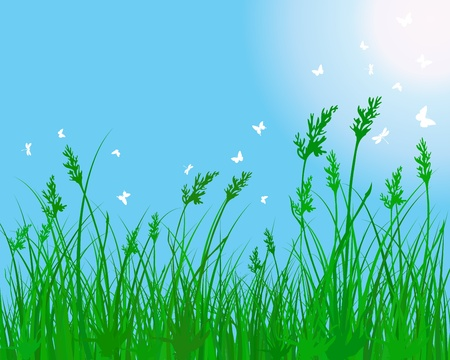 Summer meadow background.  illustration without transparency. Vector