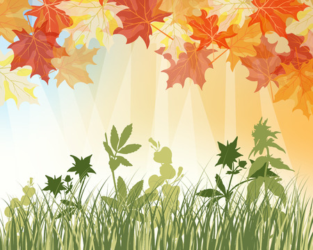 Meadow background with maple leaves. All objects are separated. Vector illustration with transparency. Stock Vector - 22775162