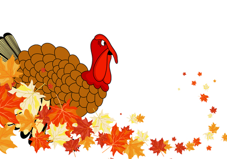 turkey feather: Thanksgiving Day background with maple leaves. All objects are separated.