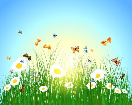 Meadow color background with butterfly and sun Vector