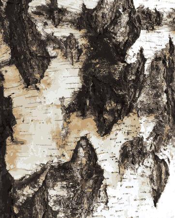 Birch bark texture pattern.