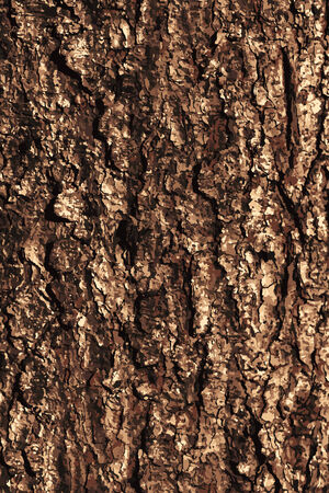 Pine bark texture pattern.