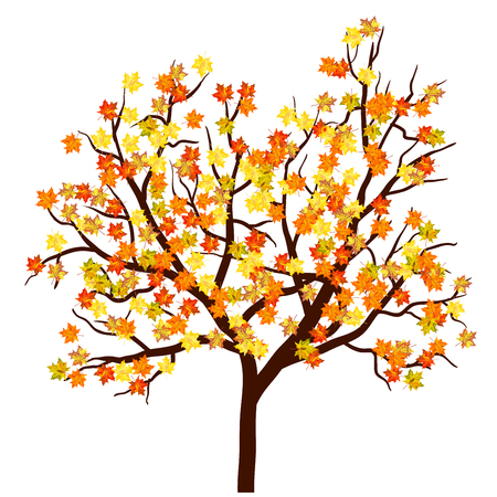 maple tree: Autumn maple tree. EPS 10  Vector illustration without transparency.