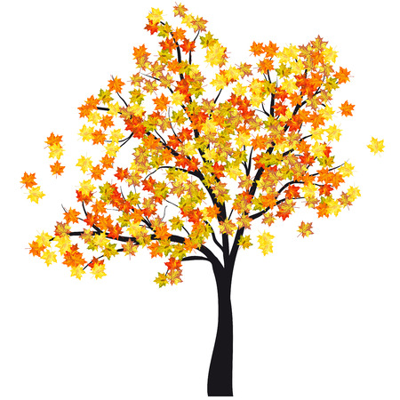 Autumn maple tree. EPS 10  Vector illustration without transparency. Vector