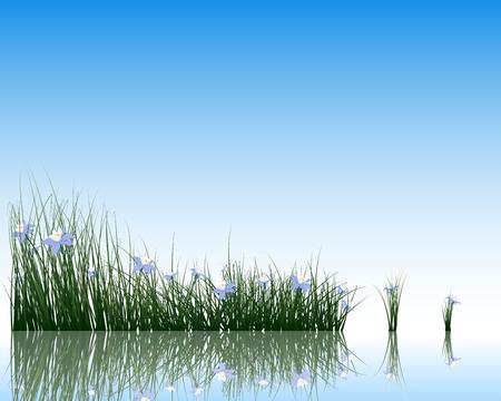 Bloem met gras op het wateroppervlak met reflectie. vector illustratie met transparantie.