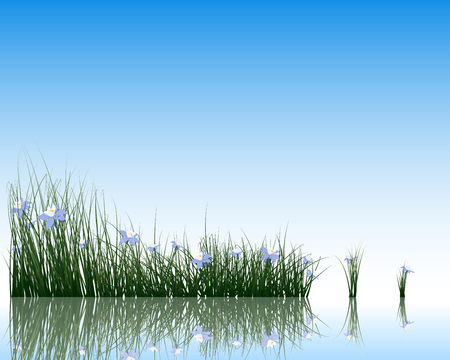 the surface of the water: Flower with grass on water surface with reflection. vector illustration with transparency.