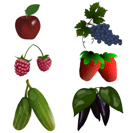 red grape: Set of color fruit and vegetables. vector illustration with transparency.